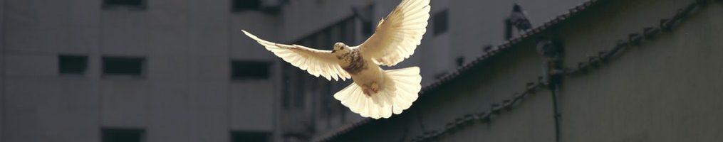 El Espíritu Santo les recordará lo que les he dicho